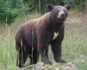 life-size-bear-062